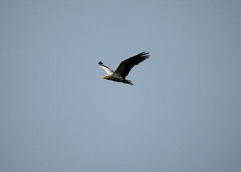 Bird, Flying, Sky, Nature, Wing, Feather, Seagull