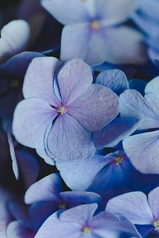 Flowers, Nature, Flora, Plant, Summer, Garden, Spring