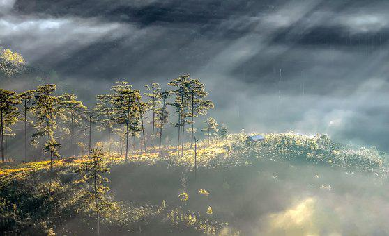 Dalat, Vietnam, Scenery, Tree, Nice, Background