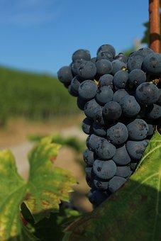 Grape, Close Up, Wine, Vine, Regent, Fruit, Winegrowing