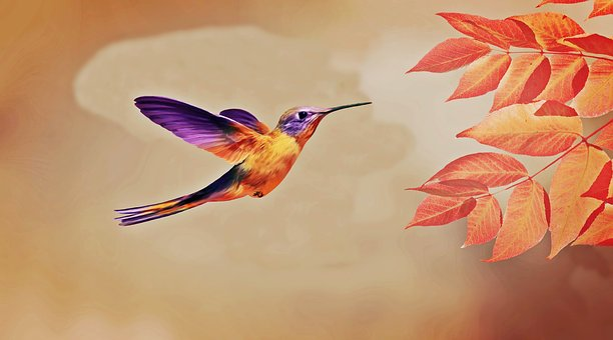 Bird, Fly, Flying, Animal, Nature, Wing, Flight, Wings