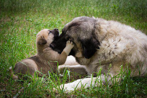 Dog, Puppy, Mother, Animal, Cute, Doggy, Sweet