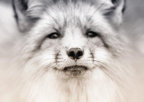 Veterinarian, Animal Face, Portrait, Animal