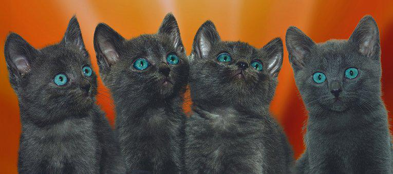 Cat, Four, Young, Grey, Kitten, Animal, Cute, Small