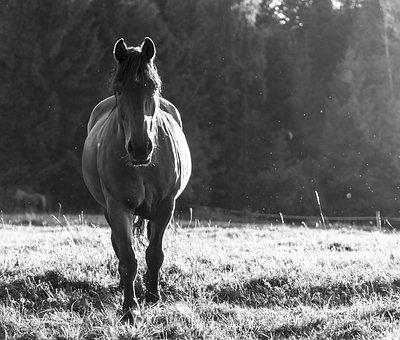 Horse, Animal, Wild, Run, Nature, Animals
