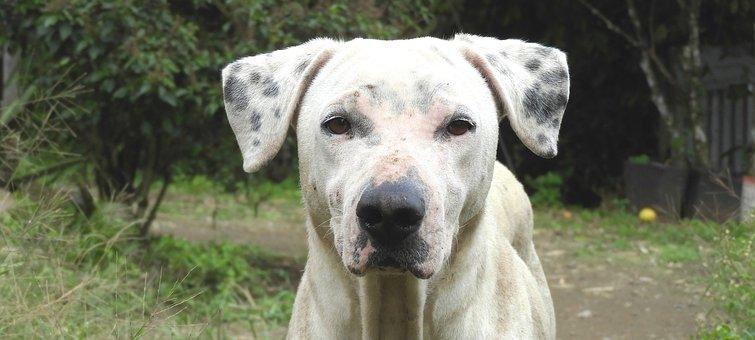 Dog, Animal, Canine, Pet, Armenia
