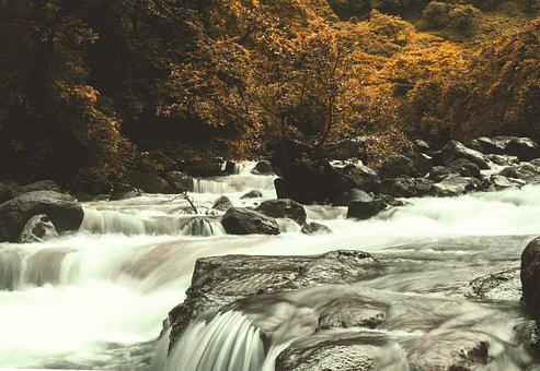 Nature, Forest, Landscape, Trees, Idyllic, Atmospheric
