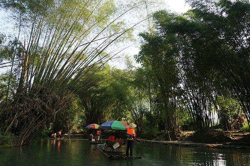 Bamboo Raft, Yulong River, Bamboo Forest