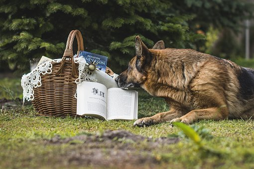 Book, Basket, Shopping Cart, Basket Wicker, Wicker, Dog