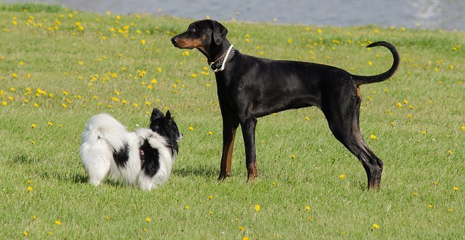 Dog Dogs Pet, Animal, Black, Young, Love, Friendship