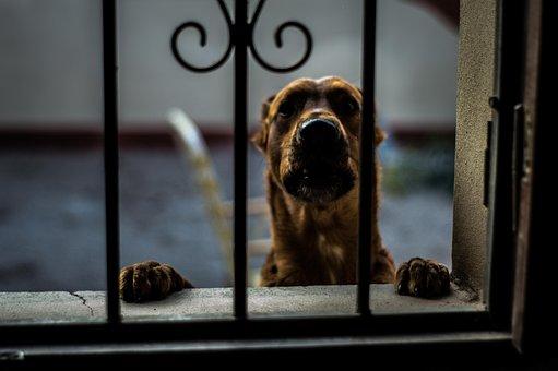 Dog, Animal, Pets, Pet, Snout, Brown, Tamed, Race