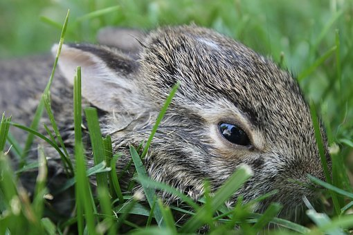 Baby Bunny, Bunny, Baby, Cute, Easter, Young, Spring
