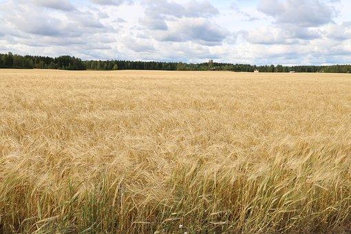 Countryside, Field, Autumn, Cornfield, Landscape, Sky
