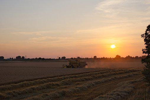 Combine Harvester, Evening, Sunset, Field, Agriculture