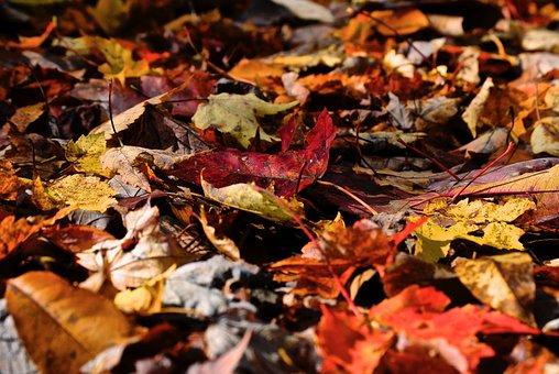 Leaves, Orange, Yellow, Brown, Fall, Nature, Autumn