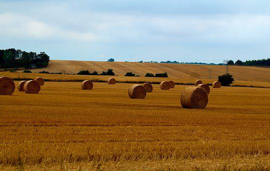 Harvest, Straw Bales, Field, Agriculture, Round Bales