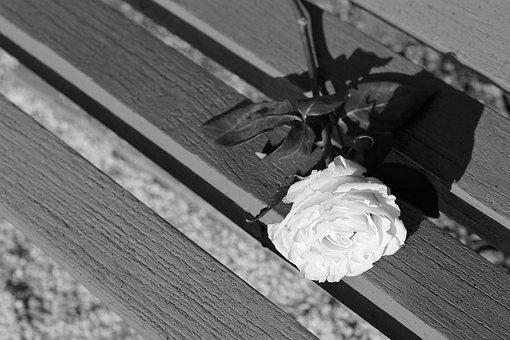 White Rose On Bench, Dramatic, Flower, Decoration