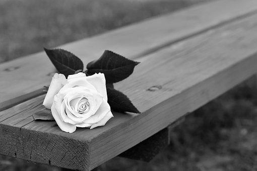 Rose On Bench, Dramatic, Flower, Decoration, Leaves