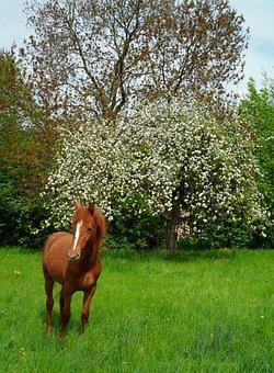 Foal, Flowers, Horse, Eat, Prairie, Field, Bucolic
