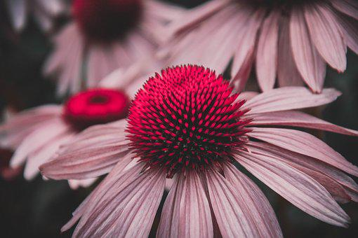 Flower, Red, Garden, Summer, Spring, Flowers, Nature
