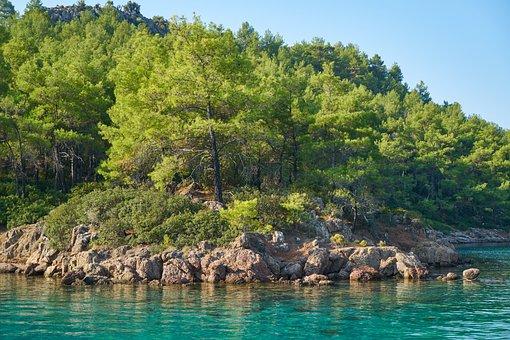 Landscape, Green, Forest, Marine, Environmental, Sky