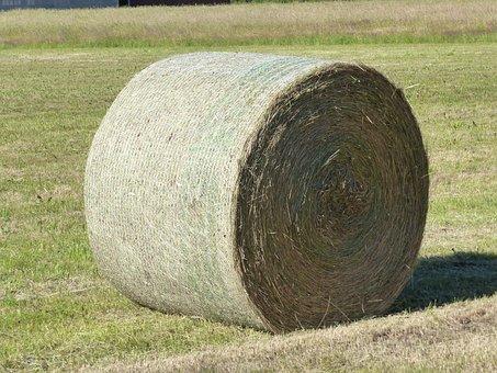 Hay, Bal, Grass, Summer, Feed, Field