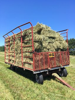 Farming, Hay Making, Farm, Agricultural, Summer