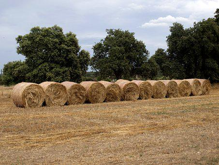 Hay, Rolls Hay, Rolls Fodder, Agriculture