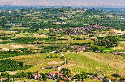 The Morra, Langhe, Italy, Wine, Grapes, Nature, Green