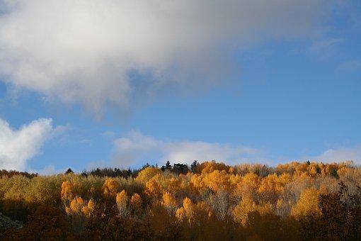 Nature, Autumn, Forest, Tree, Colors, Landscape, Trees