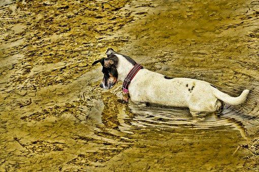Nature, Animal, Mammal, Dog, Lake, Lauer, Water