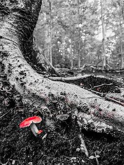 Mushroom, Tree, Red, Nature, Forest, Log, Wood, Leaves