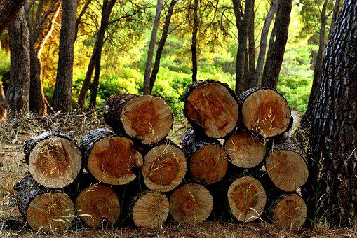 Logs, Wood, Forest, Nature, Tree, Firewood, Texture