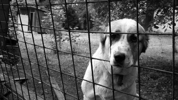 Dog, Cage, Animal, Sad, Domestic, Mammal, Canine