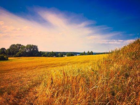 Field, Mecklenburg Vorpommern, Landscape, Nature