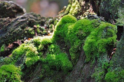 Moss, Log, Nature, Forest, Tree, Green, Bark
