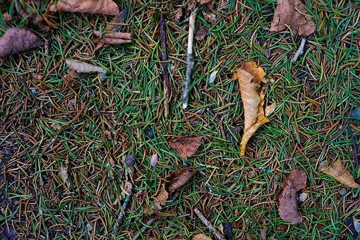 Texture, Pattern, Background, Nature, Forest Floor