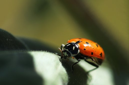 Ladybug, Insect, Nature, Red, Spring, Bug, Small
