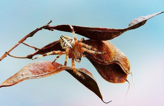 Crusader Garden, Female, Insect, Arachnids, Plant, Leaf