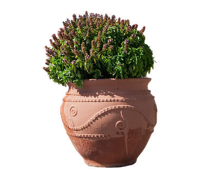 Flowerpot, Sound, Vessel, Flowers, Plant, Terracotta