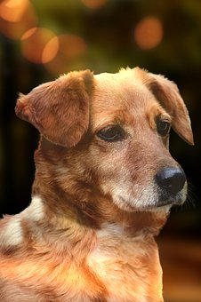 Dog, Head, Pet, Animal, Portrait, Eyes, Nose, Snout