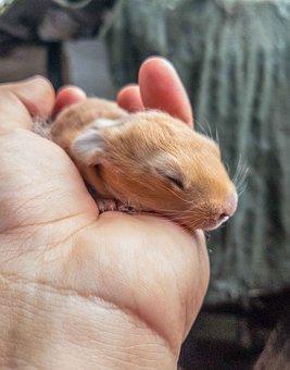 Baby, Animals, Nature, Love, Protect, Rabbit, Hands