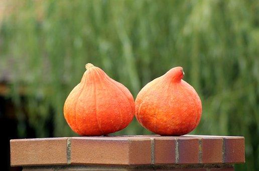Pumpkins, Vegetables, Collections, Pumpkin, Agriculture