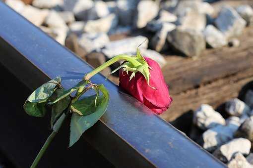 Stop Youth Suicide, Sad Red Rose, Railway, Lost Love