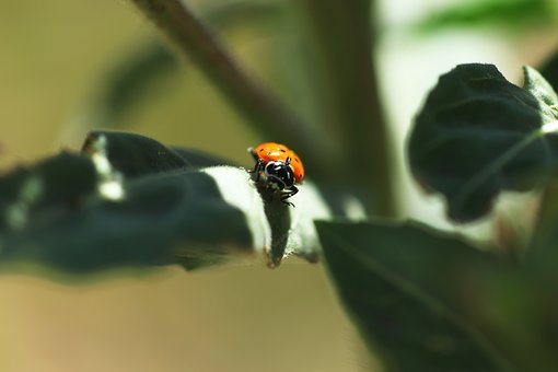 Ladybug, Insect, Nature, Red, Spring, Leaf, Bug, Small