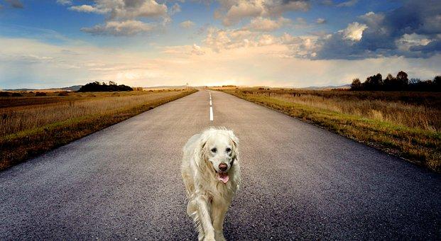Dog, Animal, Road, Sunset, Maverick, Walk, Nature