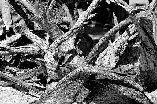 Driftwood, Tree, Nature, Beach, Coast, Water, Shore