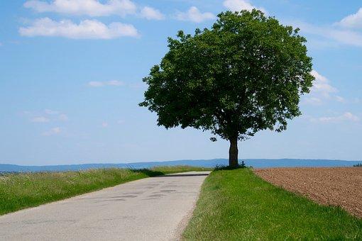 Tree, Lane, Landscape, Away, Sky, Field, Promenade