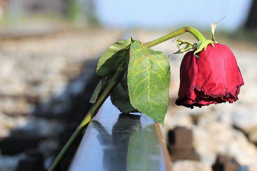 Stop Youth Suicide, Sad Red Rose, In Pain, Misery