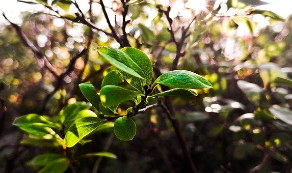 Nature, Leaf, Green, Leaves, Plant, Summer, Natural